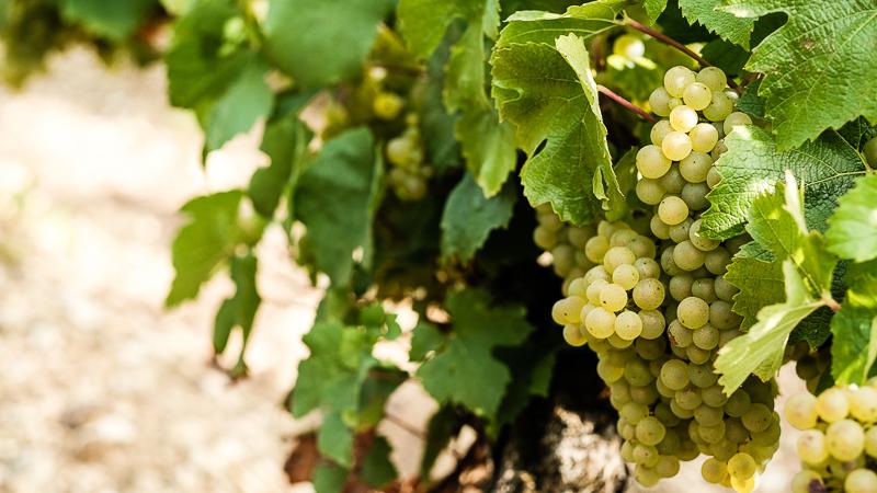 Domaine de Chaude Ecuelle - Vignerons en Grands Vins de Chablis